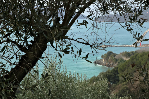 Olive leaves on the background of the cliff - MyVideoimage.com