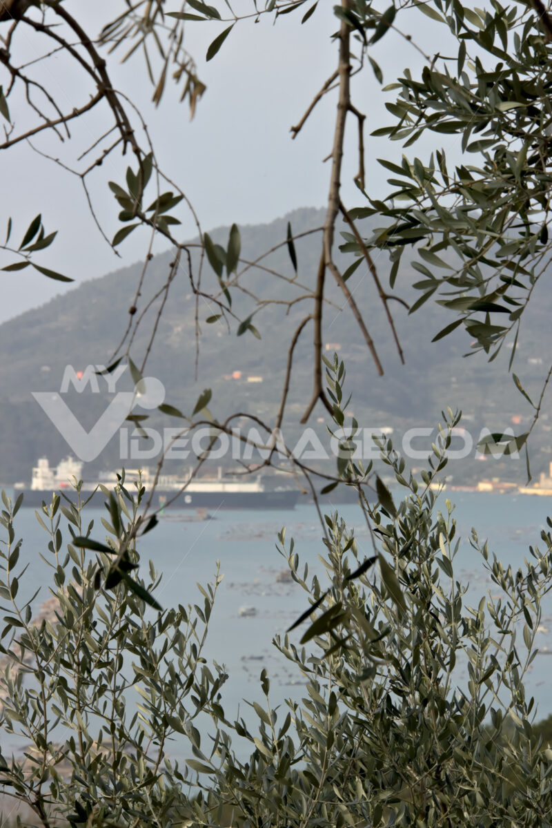 Olive leaves with background the sea and a ship - MyVideoimage.com | Foto stock & Video footage