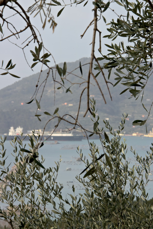 Olive leaves with background the sea and a ship - MyVideoimage.com