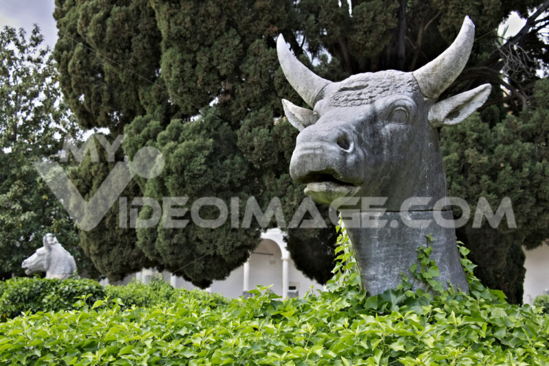 Ox head in Michelangelo's cloister in Rome. - MyVideoimage.com