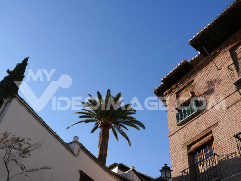 Palace with brick walls and palm. - MyVideoimage.com