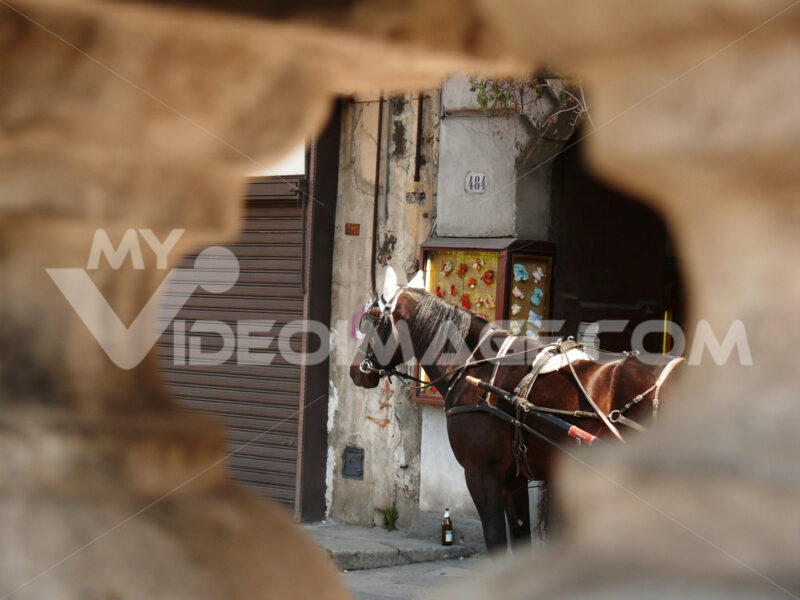 Palermo, Sicily, Italy. Close up of a horse seen from a hole on - MyVideoimage.com