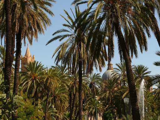 Palermo, Sicily, Italy. Mediterranean garden with palm trees and - MyVideoimage.com