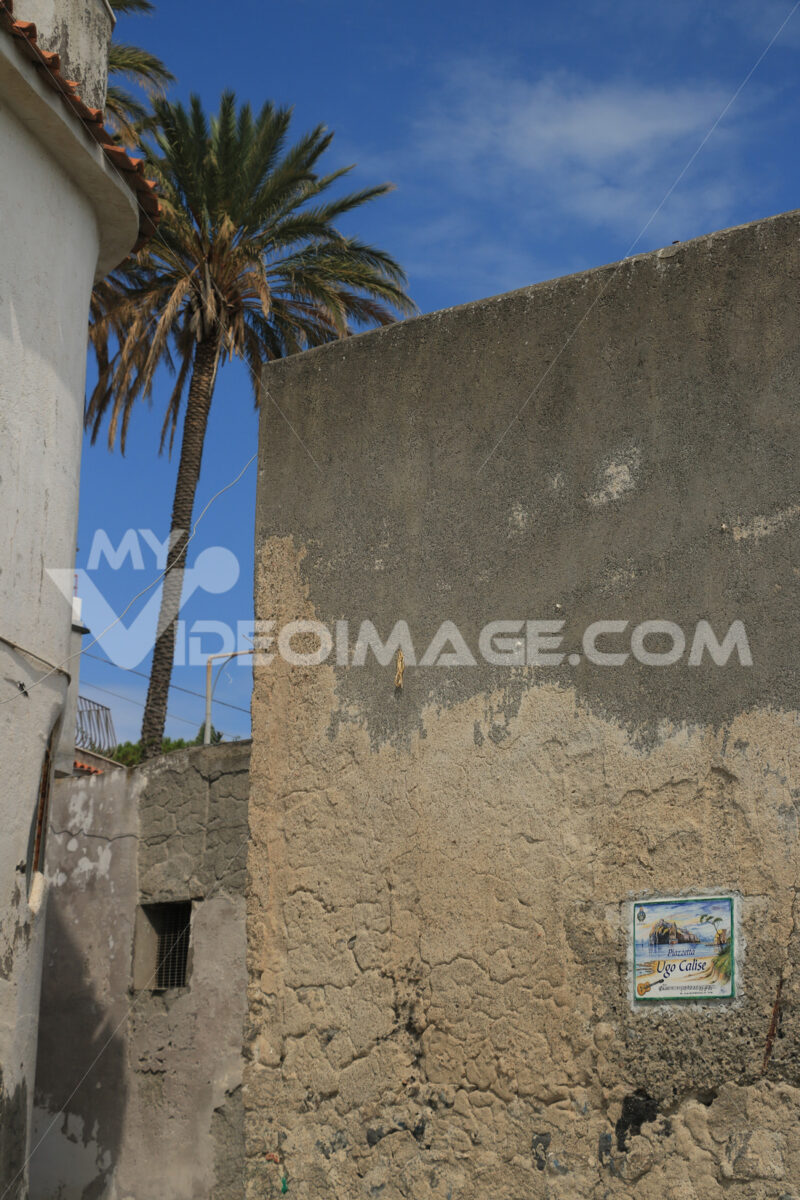 Palm plant. In the foreground an ancient wall plastered with the - MyVideoimage.com