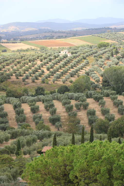 Panoramic view of the Tuscan hills. Vineyards for wine productio - MyVideoimage.com