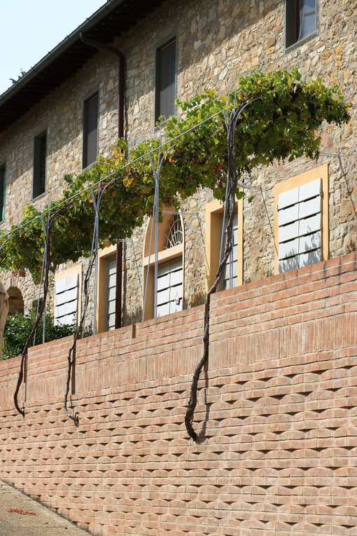 Pergola with vine plants in the Chianti hills. Brick wall with pergola with leaves. - MyVideoimage.com