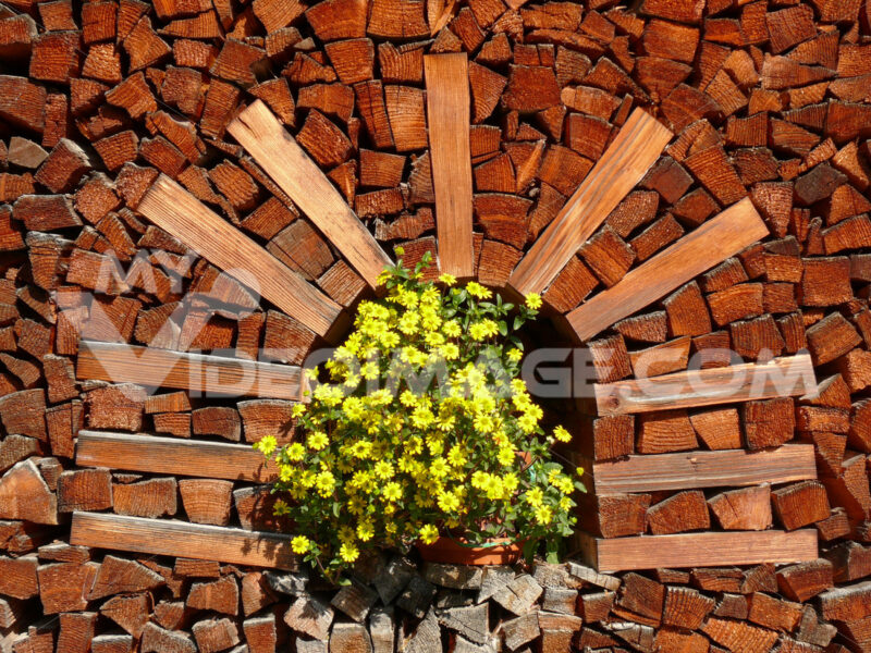 Pile of firewood with vase of yellow flowers - MyVideoimage.com