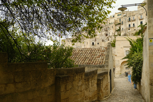 Plants with green leaves in a street of the city of Matera in southern Italy. View of the houses built in tuff stone. - MyVideoimage.com