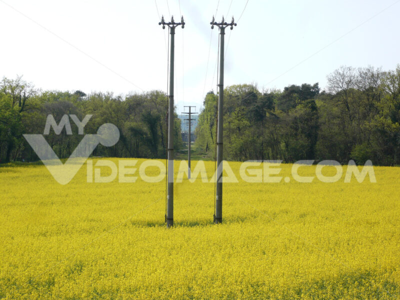 Power line in rapeseed fiel used to produce energy from biodiesel - MyVideoimage.com
