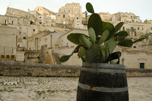 Prickly pear plant grown inside a wooden barrel. Panorama of the city of Matera. - MyVideoimage.com