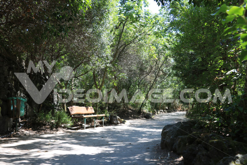 Public park in Ischia. The vegetation on the island is very vari - MyVideoimage.com