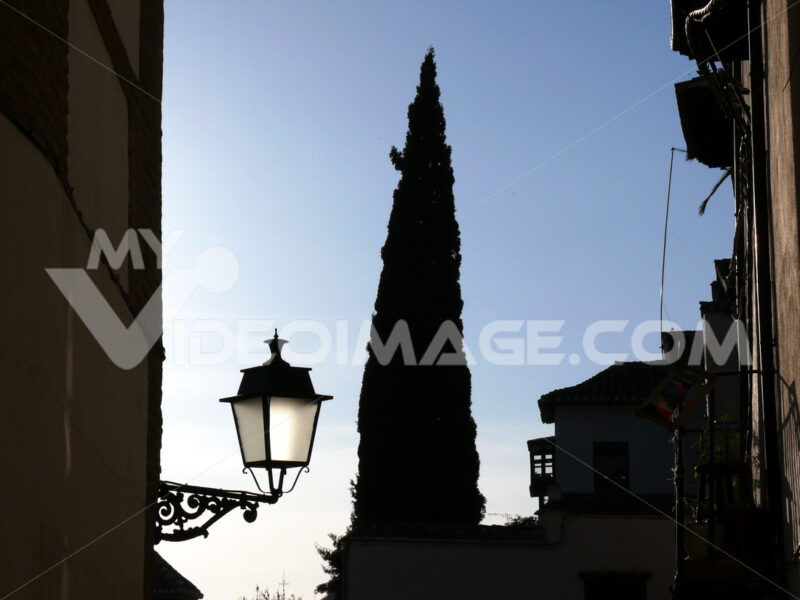Road with cypress and lamppost. - MyVideoimage.com