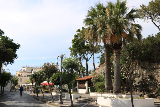 Road with palm trees and flowers in the town of Ischia. - MyVideoimage.com