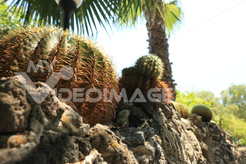 Rock garden with succulents in an island of the Mediterranean sea. - MyVideoimage.com
