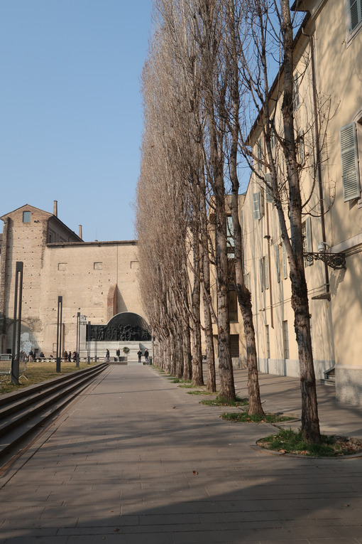 Row of poplar trees in Piazza della Pace in Parma, background with monument to Giuseppe Verdi. - MyVideoimage.com