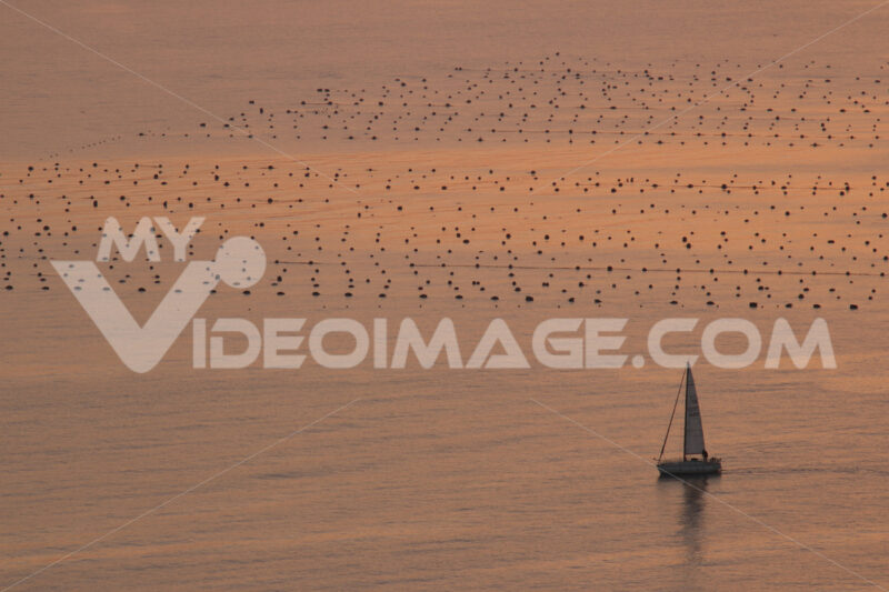 Sailboat skirts mussel farms in the Gulf of La Spezia sea. Warm sunset light. - MyVideoimage.com