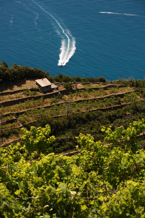 Sciacchetrà Vineyard on the terraced hills of the Cinque Terre in Liguria. Aerial view. Fotografia stock. - LEphotoart.com