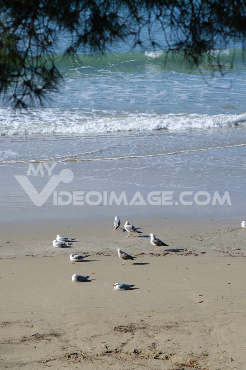 Seagulls crouched on the beach. Vertical photo of the sea and the beach of Lerici in Liguria. - MyVideoimage.com | Foto stock & Video footage