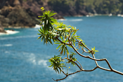 Seascape with a spurge tree (euforbia) near the Cinque Terre. In the background the waves of the blue sea break on the cliff. - MyVideimage.com