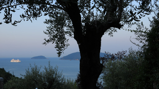Seascape with olive tree and Crystal Serenity cruise ship. The Gulf in the Mediterranean Sea with the Tino and Palmaria Islands in the background light of dawn. - MyVideoimage.com | Foto stock & Video footage