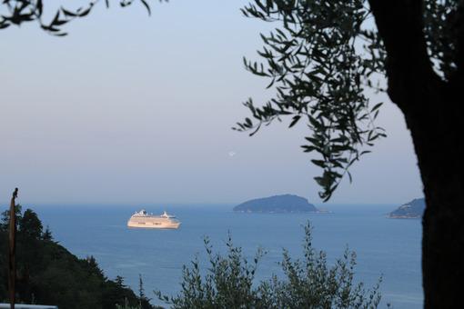 Seascape with olive tree and Crystal Serenity cruise ship. The Gulf in the Mediterranean Sea with the Tino and Palmaria Islands in the background light of dawn. - LEphotoart.com