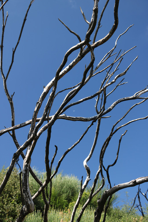 Shrubs burned by fire on the background of blue sky. - MyVideoimage.com