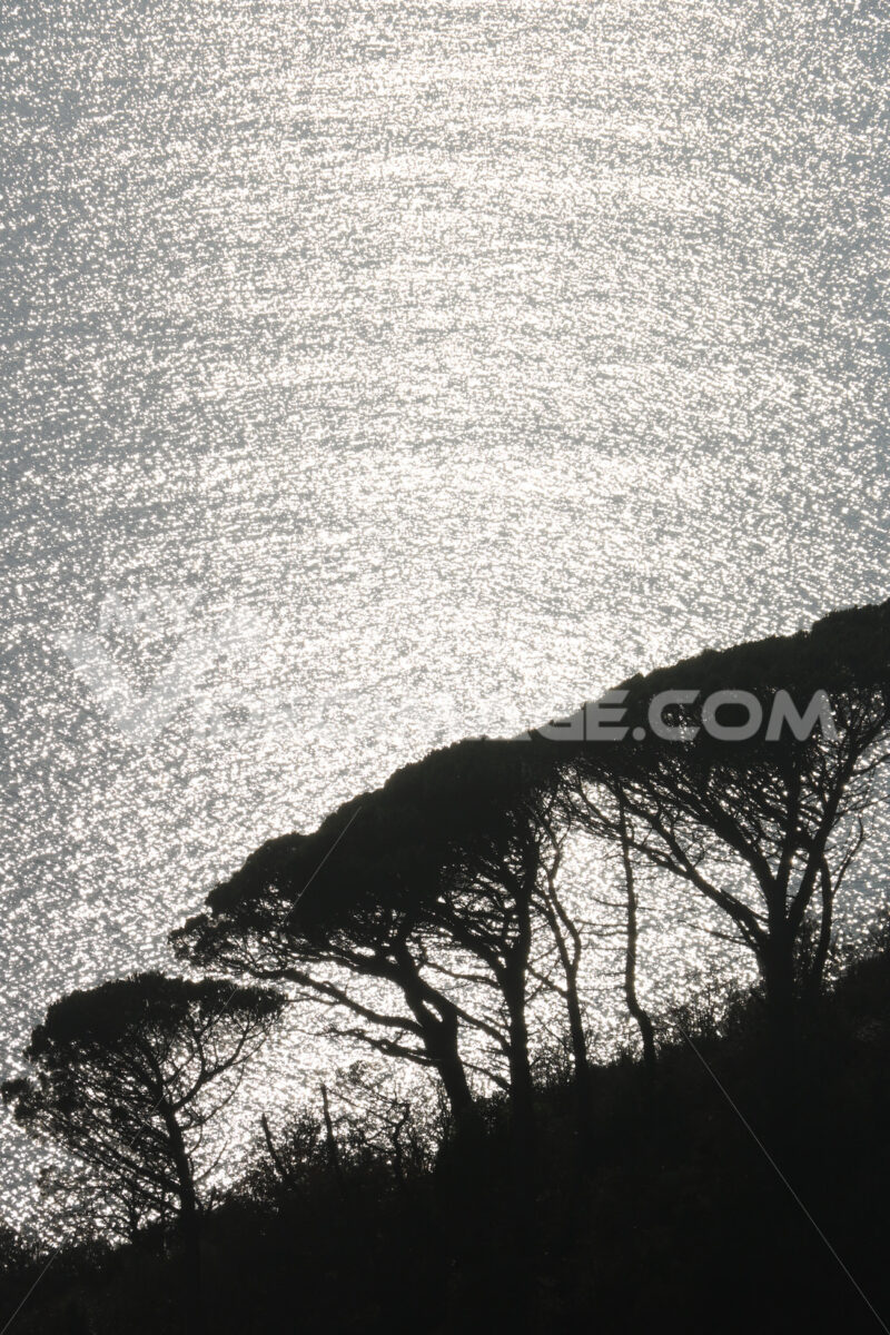 Silhouette of pine trees with the background of the sea shining at sunset in the natural park of the Cinque Terre in Liguria. - MyVideimage.com
