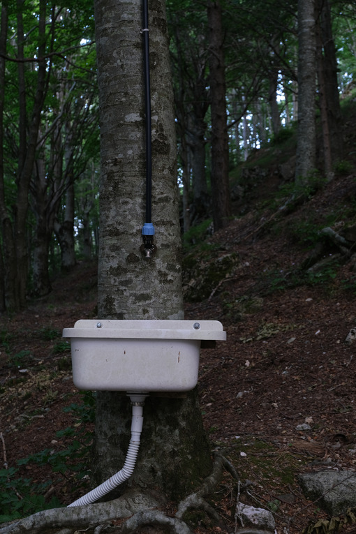 Sink on a tree trunk in the woods. A water pipe feeds a ceramic sink with a drain pipe. - MyVideoimage.com | Foto stock & Video footage