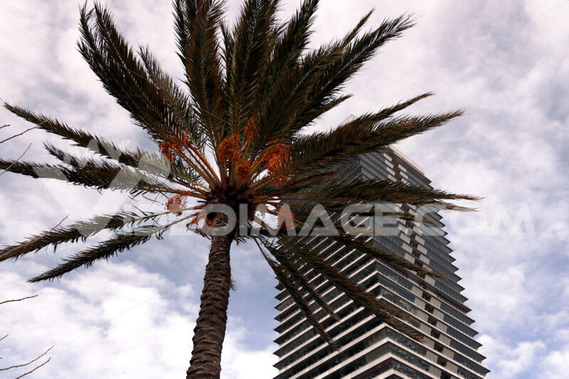 Skyscraper on the barcelona waterfront with palm tree. Barcellona foto. Barcelona photo.