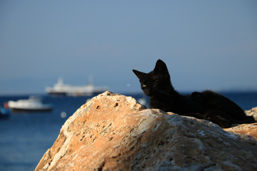 Sleepy black cat rests lying on a rock by the sea. In the backgr - MyVideoimage.com