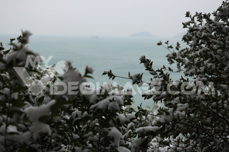 Snow fell on the leaves of the bushes by the sea in Liguria, near the Cinque Terre. - MyVideoimage.com