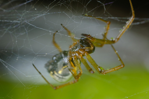 Spider in the web. Spider in its web. Stock photos. - MyVideoimage.com   Foto stock & Video footage