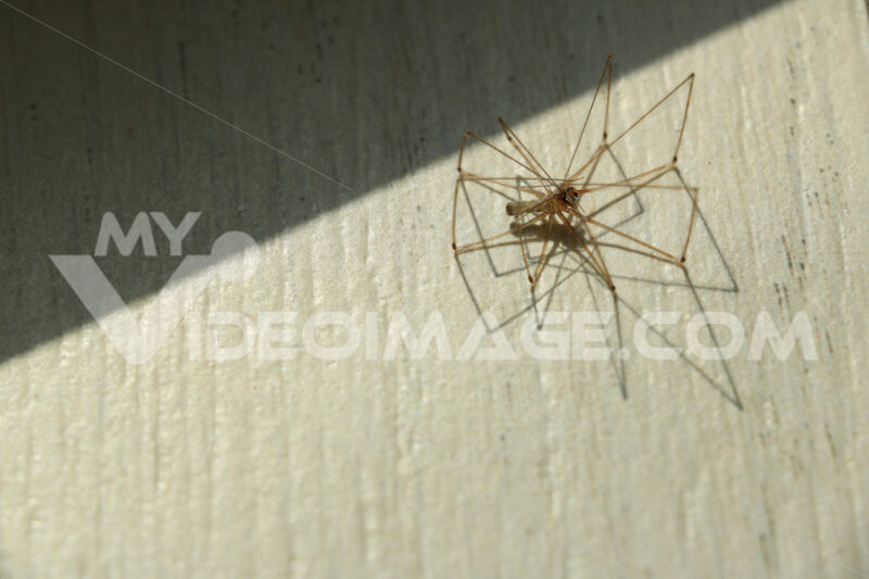 Spider on a white floor. Paws and shadows of the sun. - MyVideoimage.com
