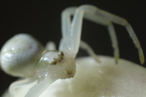 Spider snout. White spider on the petals of a flower. Stock photos. - MyVideoimage.com | Foto stock & Video footage