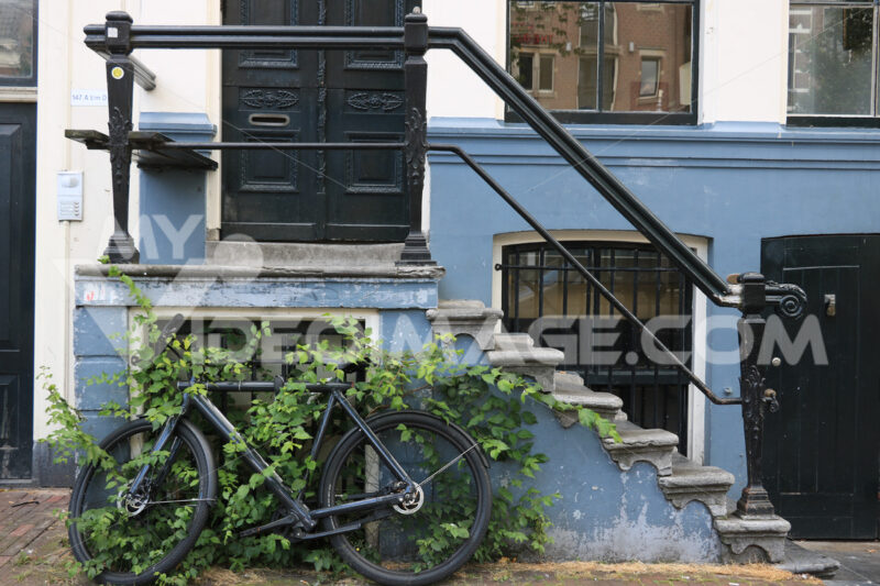 Staircase resting on an old bicycle half-hidden by leaves of a c - MyVideoimage.com
