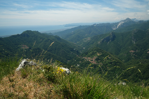 Stazzema from Monte Matanna. Apuan Alps mountains with flower in the foreground. Stock photos. - MyVideoimage.com | Foto stock & Video footage