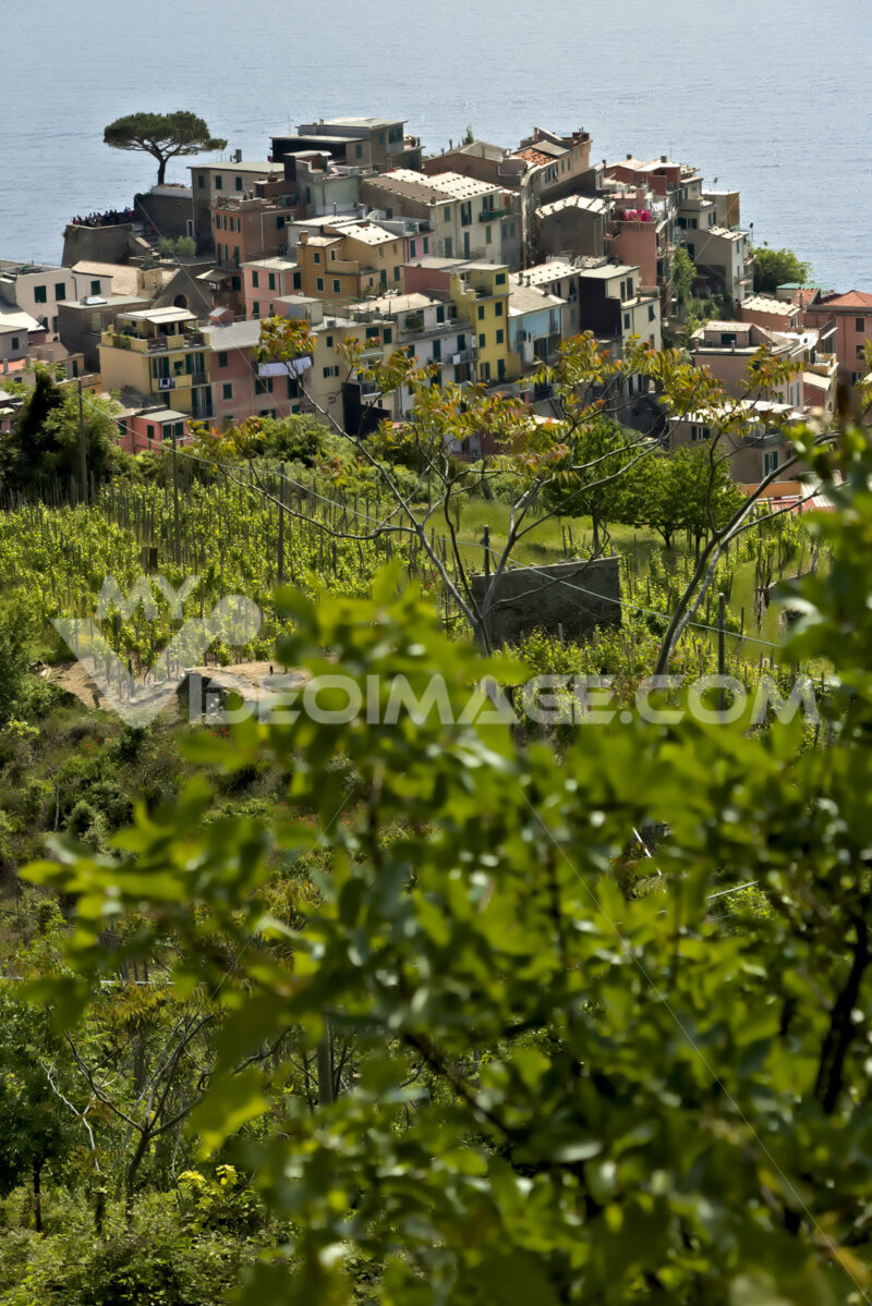 The village of Corniglia, Cinque Terre seen from a path on the hill overlooking the sea. - LEphotoart.com