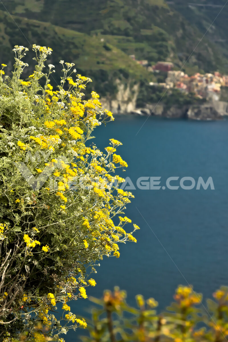 The village of Manarola seen from Corniglia. Sfondo mare. - MyVideoimage.com