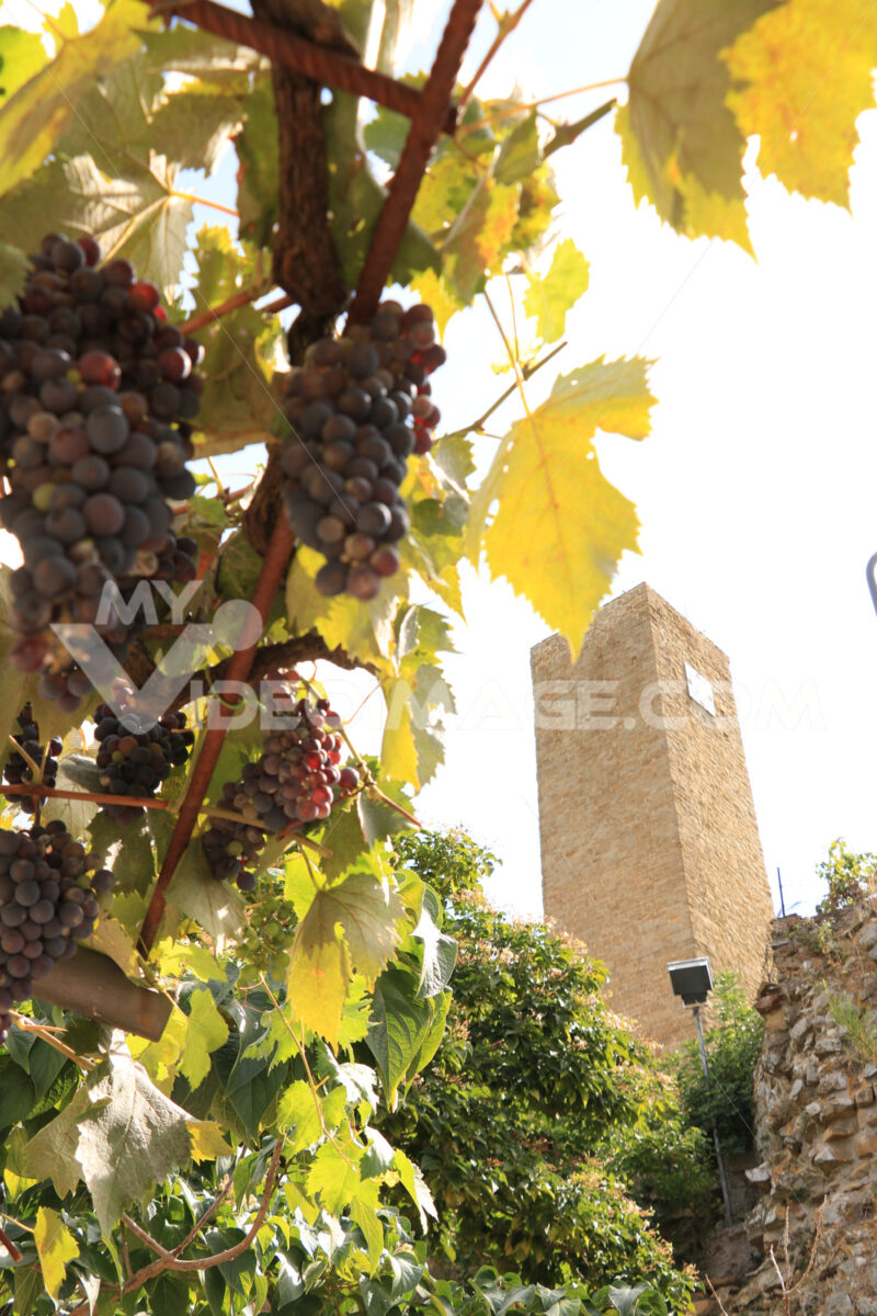 The village of Pereta, near Magliano in Maremma Toscana. Ancient - MyVideoimage.com