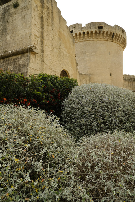 Tower of the Tramontano di Matera castle built in stone. In the foreground, olive-tree bushes pruned with a sphere. - MyVideoimage.com | Foto stock & Video footage