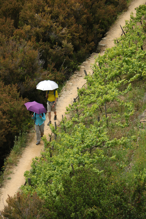 Trail with two tourists with an umbrella on the hills of the Cinque Terre. - LEphotoart.com