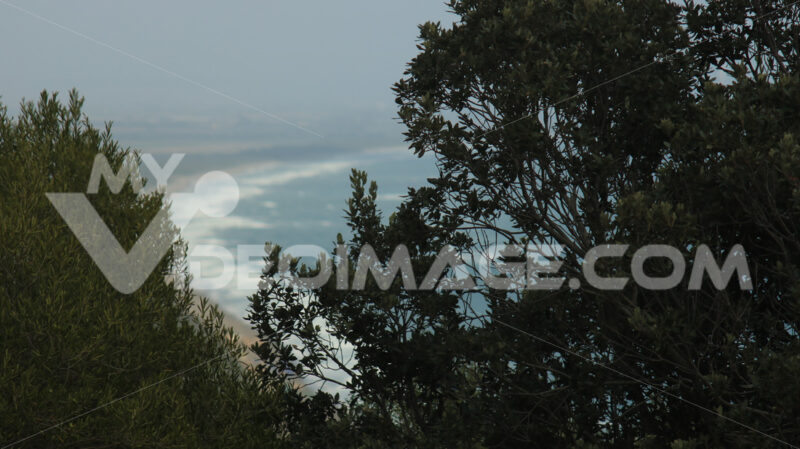 Tree fronds in the Tuscan countryside. In the background the Mar - MyVideoimage.com
