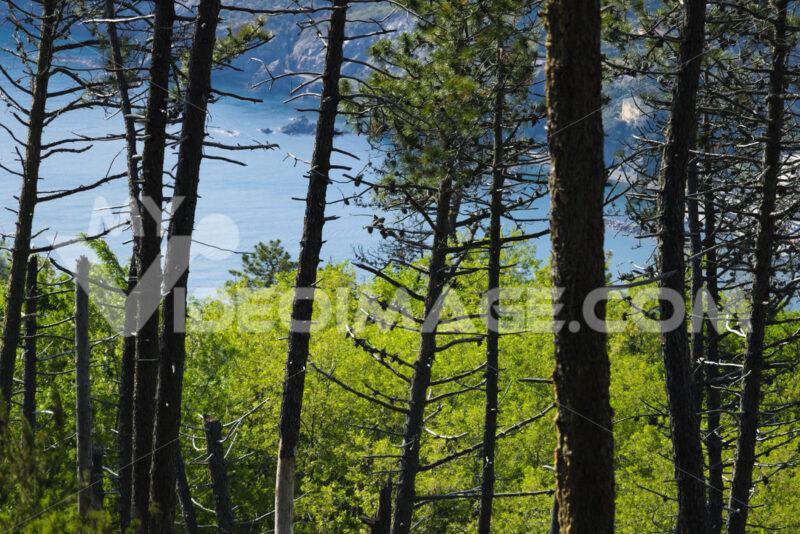 Trees and woods on the Cinque Terre sea. Trees and sea in a panorama of the Cinque Terre (Province of La Spezia) - MyVideimage.com