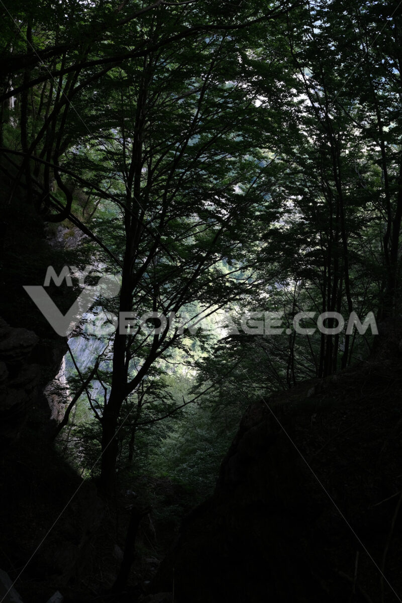 Trees in forest.  A path for trekking among tall trees in the Tuscan mountains of the Apuan Alps. - MyVideoimage.com | Foto stock & Video footage