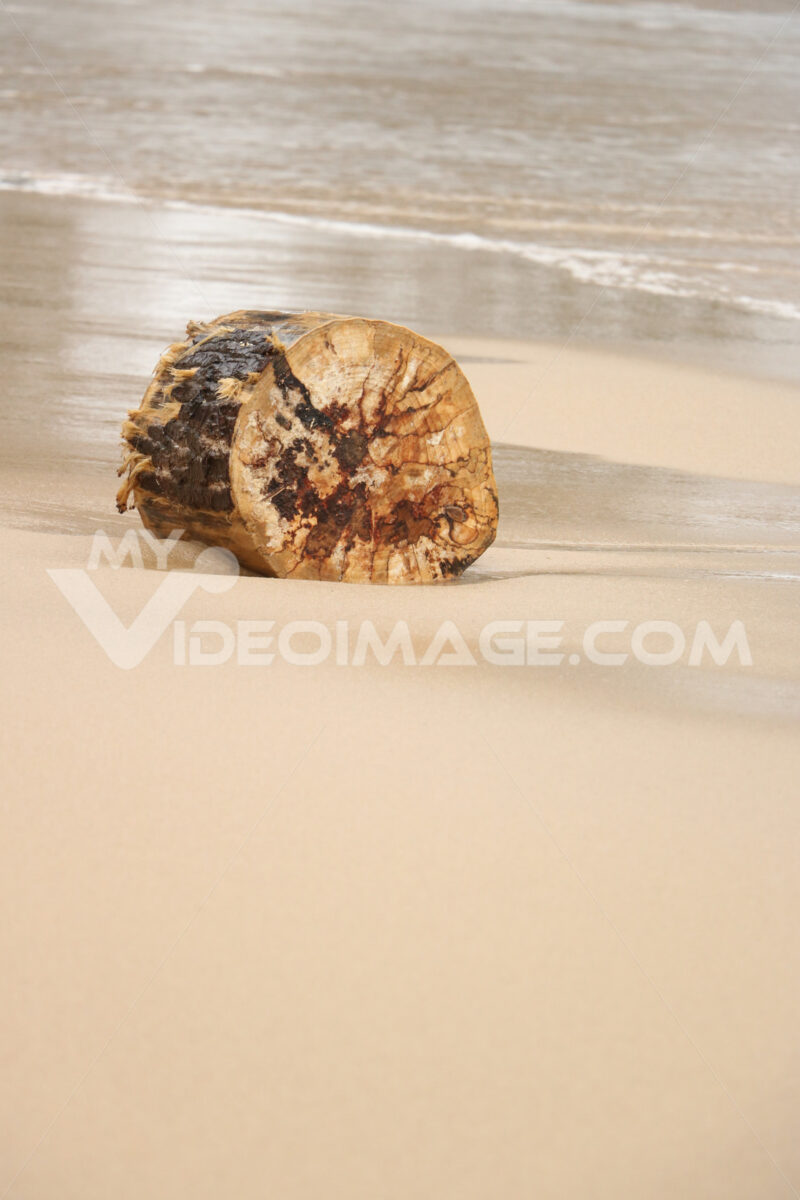Trunk of wood transported from the sea to the beach with golden sand. - MyVideoimage.com