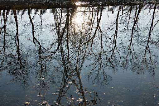 Turbigo. Milan. Lombardy. Italy. Reflection of a trellis in the water of the Naviglio Grande river - MyVideoimage.com