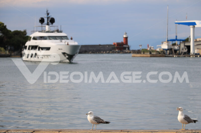 Two seagulls are walking on the quay of the port of Ischia, near - MyVideoimage.com