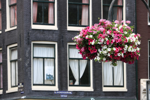 Vases with flowers suspended in the city center. - MyVideoimage.com