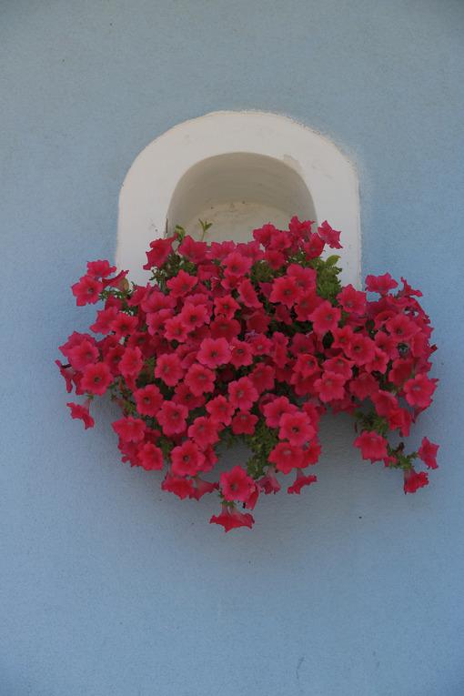 Vaso di fiori. Vase of red flowers on Mediterranean house facade. - MyVideoimage.com | Foto stock & Video footage