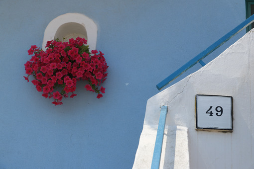 Vaso fiori. Foto Procida. Vase of red flowers on Mediterranean house facade. - MyVideoimage.com | Foto stock & Video footage